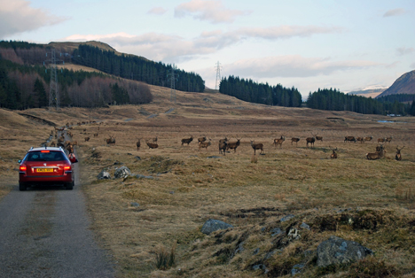 Red Deer on the way home